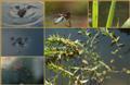 Είδη τρέφονται με μικρά έντομα